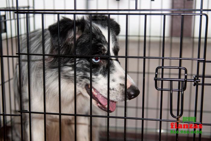 animal abuse laws in california