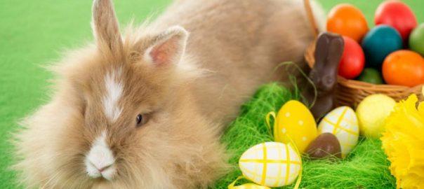 mo hemos llegado el Conejo de Pascua