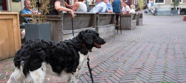perros de servicio en un negicio
