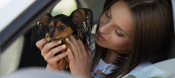 conducir distraidas con mascotas