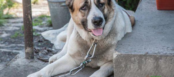 leyes de abuso de mascotas