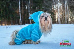 proteger sus mascotas del frio