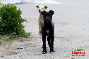 what to do about a stray dog