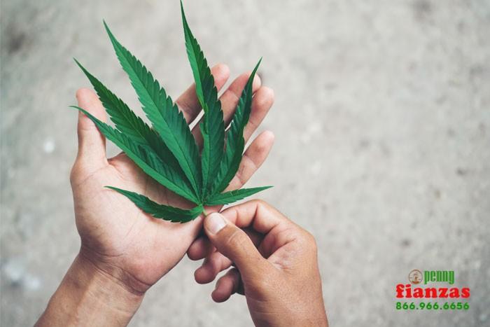 transporting marijuana laws